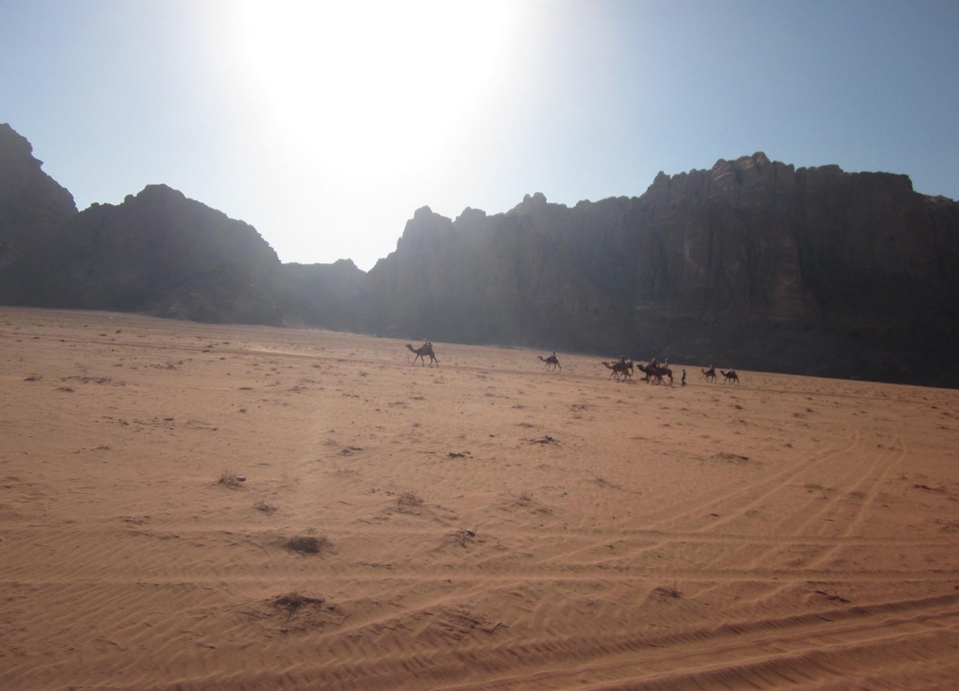 kuvituskuva, kameleita ja vuoria